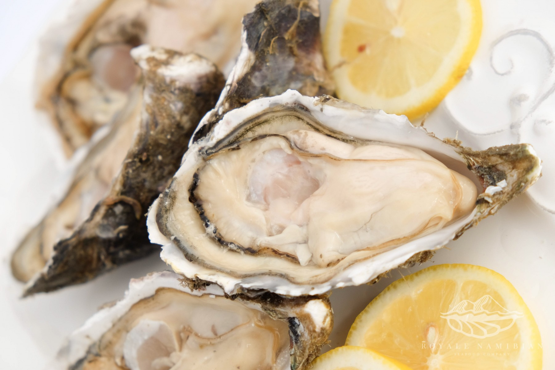 Royale Namibian Seafood Company - Oysters - Fermar Oysters march 2015_27