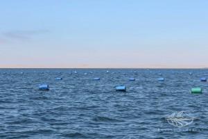 Royale Namibian Seafood Company - Oysters - Barrel - FOTO 11